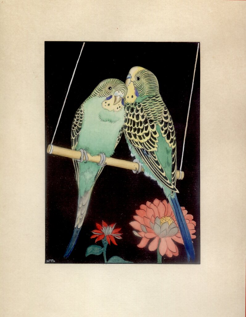 wellensittiche-1934.jpg